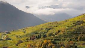 Free Spitz Vineyards No.4 Royalty Free Stock Images - 11711769