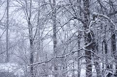 Spitze 3 des Winters Stockfotos