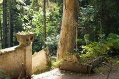 Spitze der Steintreppe Lizenzfreies Stockfoto