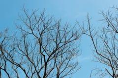 Spitze der toten Bäume mit bewölktem Himmel Lizenzfreie Stockfotografie