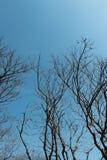 Spitze der toten Bäume mit bewölktem Himmel Stockbilder