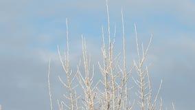 Spitze des Baums umfasst im Frost im Winter stock video