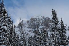 Spitze des Schnees bedeckte den Berg, der durch Evergreens umgeben wurde stockfotos
