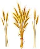 Spitze des Weizens Stockfotografie