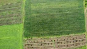Spitze hinunter Vogelaugengesamtlänge von grünen Feldern am Sommertag stock video