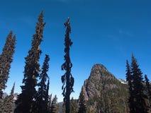 Spitze und Bäume Guye Stockfoto