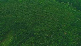 Spitze, Vogelperspektive Stark-Satzgrünbäume bewegen sich langsam Brummengesamtl?nge 4K stock video
