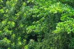 Spitze von Bäumen in Rio de Janeiro, Brasilien Stockbild