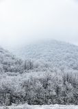 Spitze von den Bergen bedeckt mit schneebedecktem Kiefernwald im Nebel Stockfotos