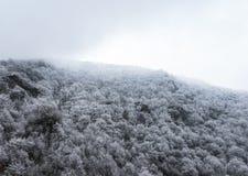 Spitze von den Bergen bedeckt mit schneebedecktem Kiefernwald im Nebel Stockbilder