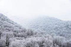 Spitze von den Bergen bedeckt mit schneebedecktem Kiefernwald im Nebel Lizenzfreies Stockbild