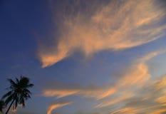 Spitze von Kokosnussbäumen unter blauem Himmel Stockfotografie