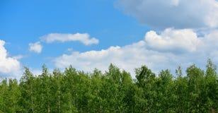 Spitze von Suppengrün und von Himmel mit Wolken stockfotografie