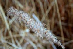 Spitze von wilden Gräsern stockfoto