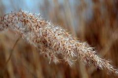 Spitze von wilden Gräsern lizenzfreie stockbilder