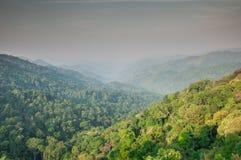 Spitzenüberdachung evergreenforest lizenzfreie stockfotografie
