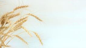 Spitzen des Weizens auf der linken Seite des Rahmens stockbilder
