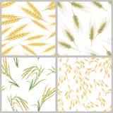 Spitzen des Weizens, der Hafer, des Reises und des Roggens Stellen Sie von den nahtlosen Mustern der Kornohren ein vektor abbildung