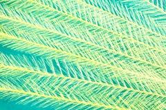 Spitzen- Hintergrund Lizenzfreies Stockbild