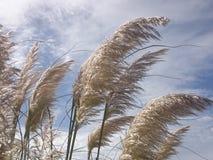 Spitzen im Wind Lizenzfreie Stockbilder