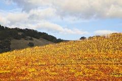 Spitzenhügelbäume in den Weinbergen lizenzfreie stockfotografie