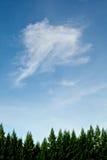 Spitzenkiefer und schöner Himmel stockbild