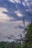 Spitzenlinie der grünen Bäume über Himmel lizenzfreie stockbilder