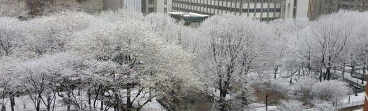 Spitzer blanco fresco Foto de archivo libre de regalías