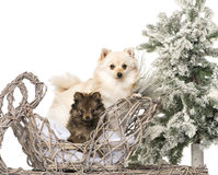 Spitzes framme av ett jullandskap Royaltyfria Foton