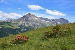 Spitzhorn e Alpenrosen nominati montagna Fotografia Stock