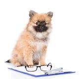 Spitzhund med skrivplattan och exponeringsglas bakgrund isolerad white Royaltyfri Fotografi