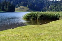 Spitzingsee (lago in Alpes) Fotografie Stock Libere da Diritti
