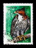 Spizaetus Ornatus, serie хищных птиц, около 1994 Стоковое Изображение RF