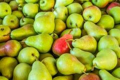 Spjällåda av pears Royaltyfri Bild