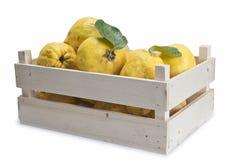 Spjällåda med quinces royaltyfri fotografi