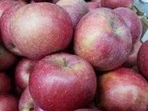 Spjällådor av äpplen royaltyfria bilder