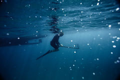 Spjut-fisher Arkivfoto