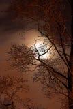 spöklik natt Arkivfoton