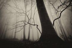 Spöklikt skoglandskap med det gamla trädet på allhelgonaafton Royaltyfri Bild