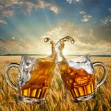 Splash of beer against wheat and sunset Stock Image