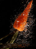 Splash Carrot in water Royalty Free Stock Photography