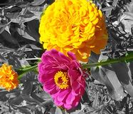 A splash of color Royalty Free Stock Photo