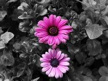 Splash Of Color Stock Images
