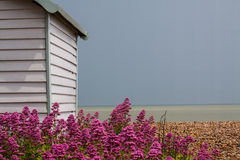 A Splash of Colour. View of a beach hut, brightly coloured flowers, a beach and the English Channel on a stormy day Stock Image