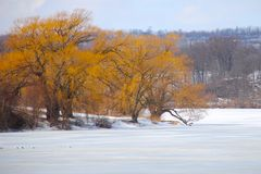 A Splash of Fall Color in Winter. Orange leaves stand out against the frozen lake stock photo