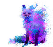 Splash fox in purple and blue color Royalty Free Stock Image