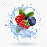 Splash of fresh Mixed forest berries realistic vector icon set Stock Photos