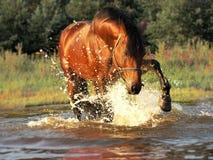 Splash Horse Royalty Free Stock Photos