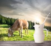 Splash in jug of milk on beige cow background. Splash in a jug of milk on a beige cow background. A jug of milk stands on a wooden table against the background stock photos