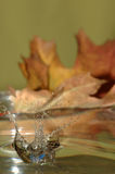 Splash and leaf. Clear splash in front of out of focus autumn leaf Stock Photography